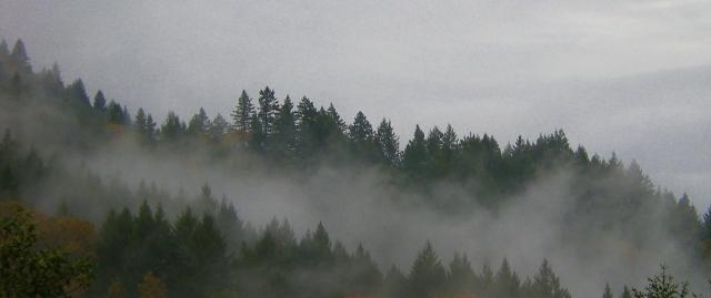 sonoma coast fog 2